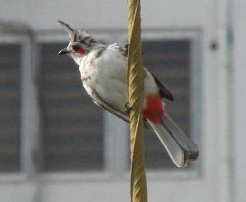 bird 005_edited